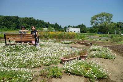 色とりどりの花と香りに包まれるハーブ園