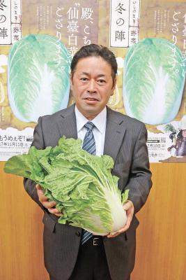東松島の被災農地で栽培 柔らか甘い伝統種仙台白菜 復活の味 11日から提供 いしのまき野菜冬の陣