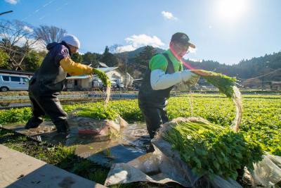 きょうは大雪 各地で氷点下 厳しい冷え込み 河北でセリの収穫最盛期