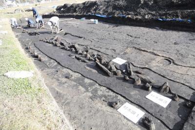 赤井遺跡 新たに材木塀や溝跡発見 蝦夷から守る防御柵と確定 第47次川前 地区発掘調査