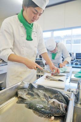 宮城水産高 類型間の連携活動 生徒養殖のクロソイで実習 育てて料理して味わって