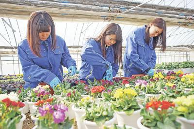 プリムラの花の手入れに励む生徒たち
