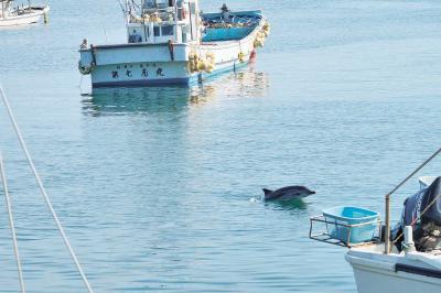 岸壁に係留された漁船の間を泳ぐイ...