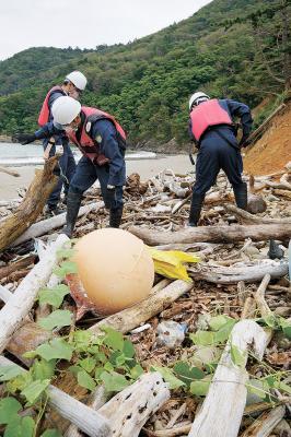 高潮などで打ち上げられた流木など...
