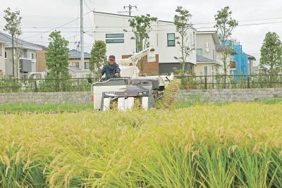 石巻地方で稲刈り作業 品質良好 収量も平年並み 黄金揺れる実りの秋