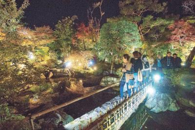 照明が当たり木々の葉を鮮やかに浮...
