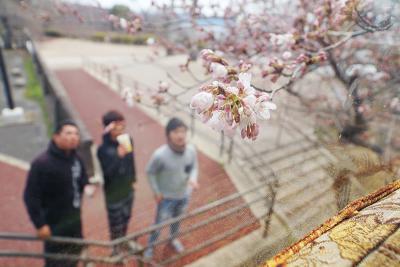 午前中から市民らが花見に訪れた