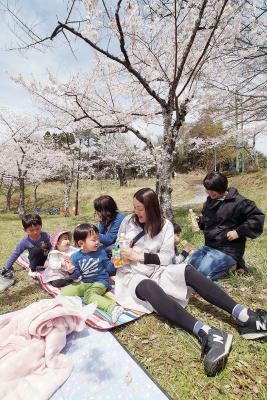 日和山は桜が満開 好天後押し開花進む