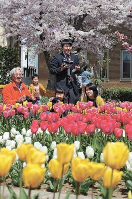 きょうは「穀雨」 若生工業 庭園一般開放 桜とチューリップ共演