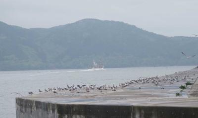 公海での漁に向け出港した榮久丸