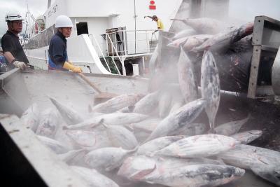石巻魚市場 遠洋一本釣り船今季初入港 冷凍カツオ200トン水揚げ