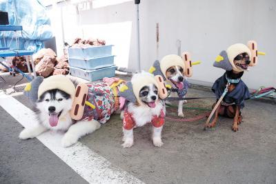 フードツーリズム研究会 4匹を大使犬に委嘱 石巻おでん広める「ワン!」