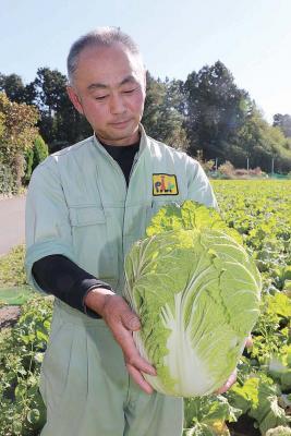 献上品に「松島純2号」 石巻地方唯一 東松島の白菜 葉肉厚で甘み強く 皇位継承の大嘗祭へ