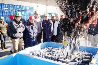 サバシーズン到来に期待 石巻で130トン水揚げ 一カ月遅く漁まとまり